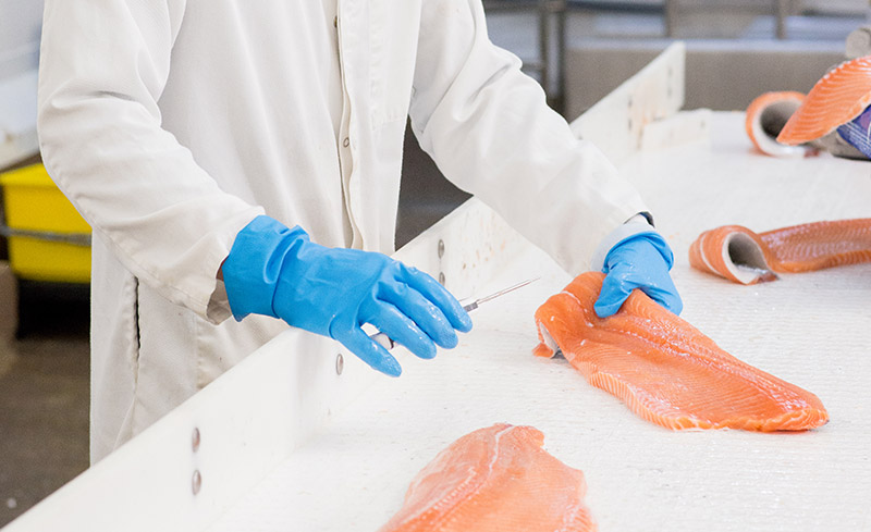 staff inspecting salmon on processing line